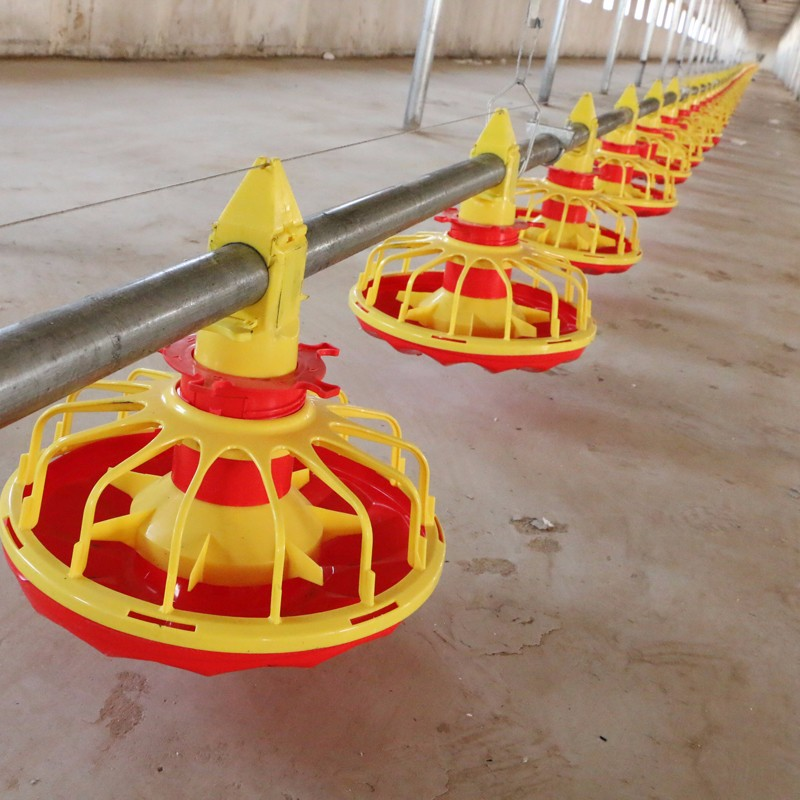 What is automatic chicken feeding system?