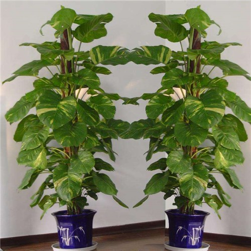 Artificial Pot Plants