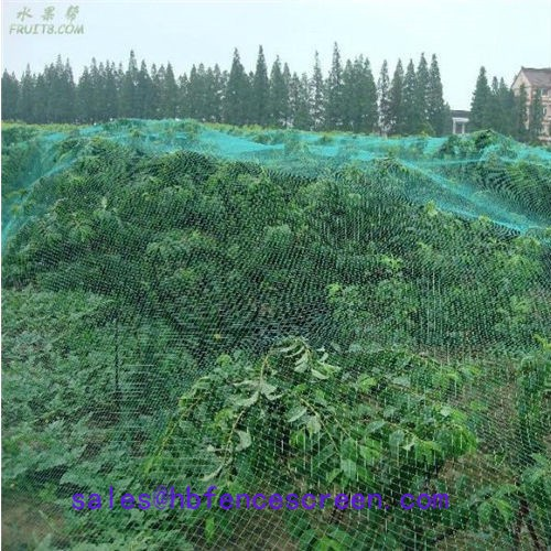 Supply Anti Bird Net, Anti Bird Net Factory Quotes, Anti Bird Net Producers