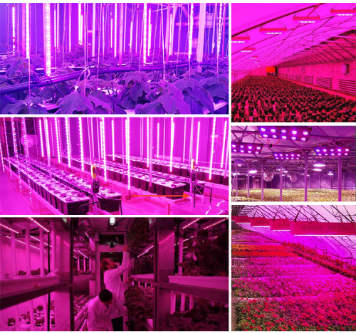 600w led plant grow light Company
