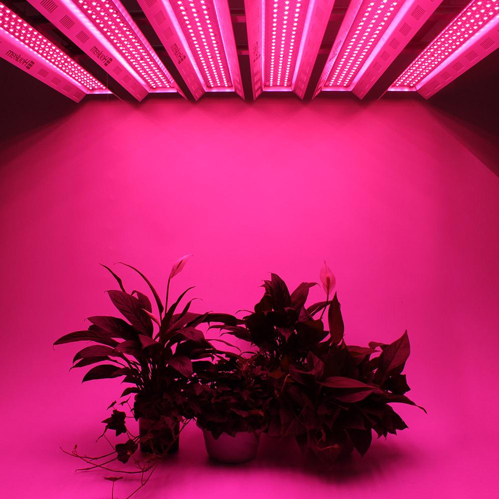 Купить Купить комнатное растение Grow light