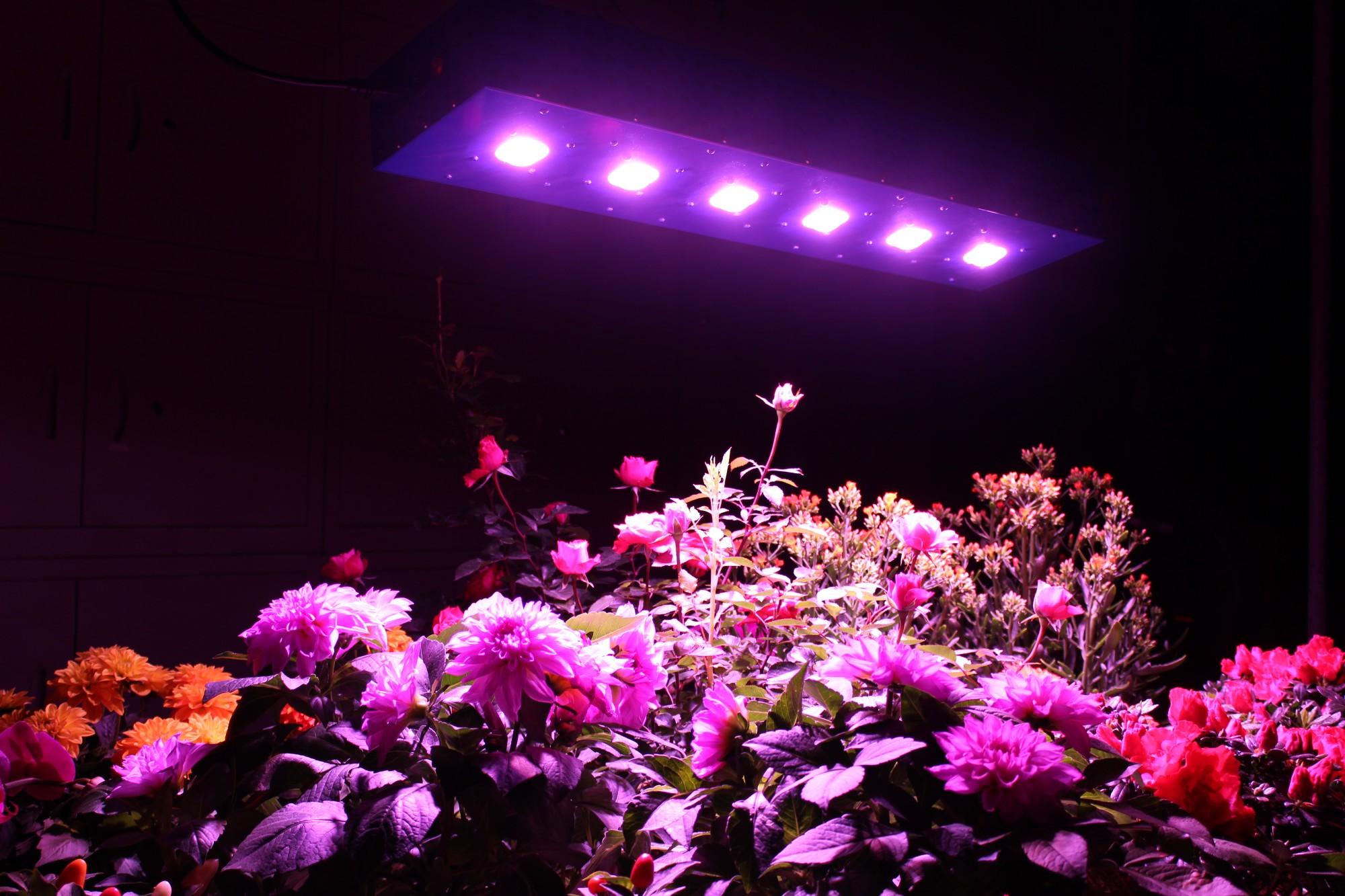 Продажи становятся светлее, Покупают свет, полный спектр - светят Поставщики