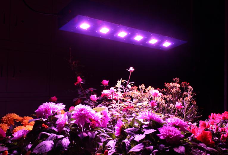full spectrum grow light Suppliers