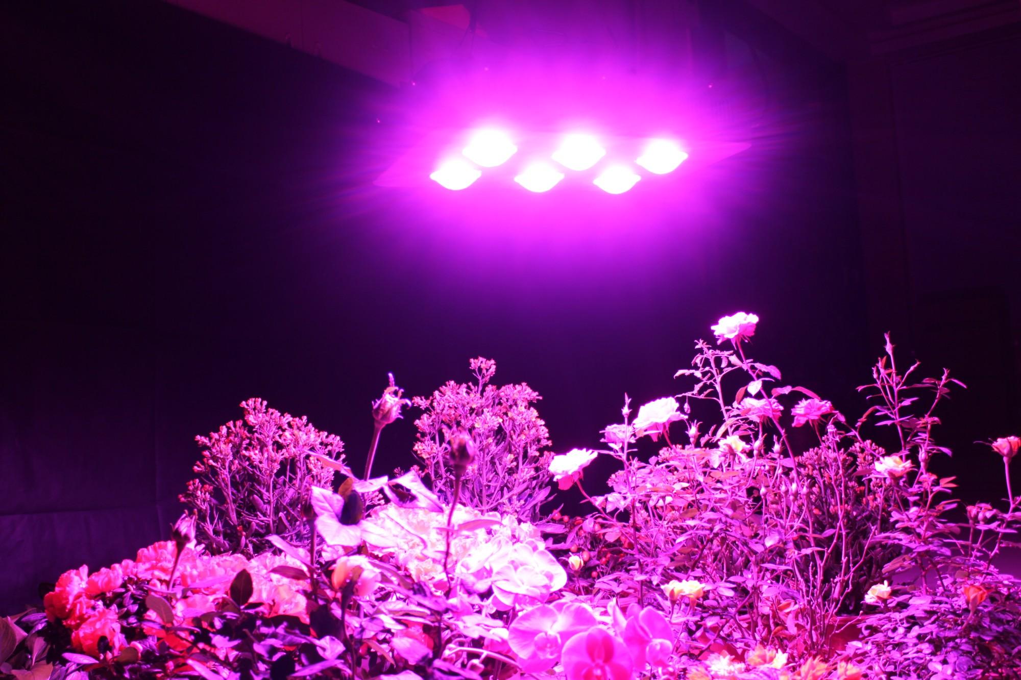 Zasilanie kolbą doprowadziło światło rosnące, 600W led roślina rośnie światło Firma