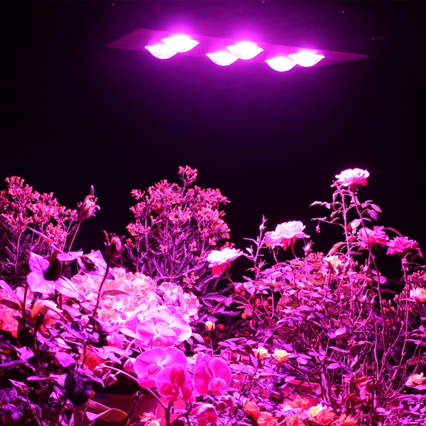 Supply cob led grow light