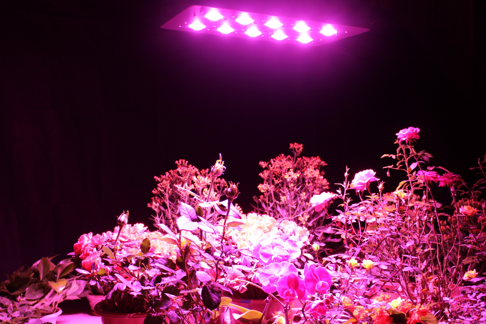 Wholesale 1000w grow light,High quality professional led grow light,1000 watt led grow light Promotions