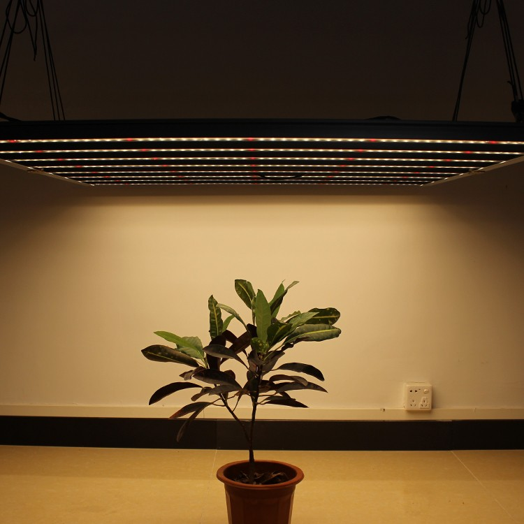 High quality 600W Samsung LM301B/H LED chips grow light ,China 600W Samsung LM301B/H LED chips grow light Factory,600W Samsung LM301B/H LED chips grow light Purchasing
