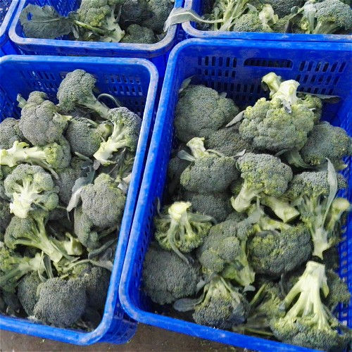 Broccoli Manufacturers, Broccoli Factory, Supply Broccoli