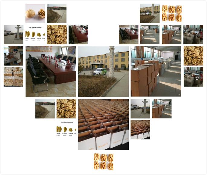工厂图片综合2.jpg