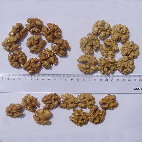 light halves walnut kernels