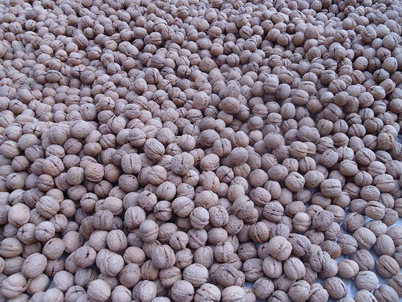 Chinese walnuts