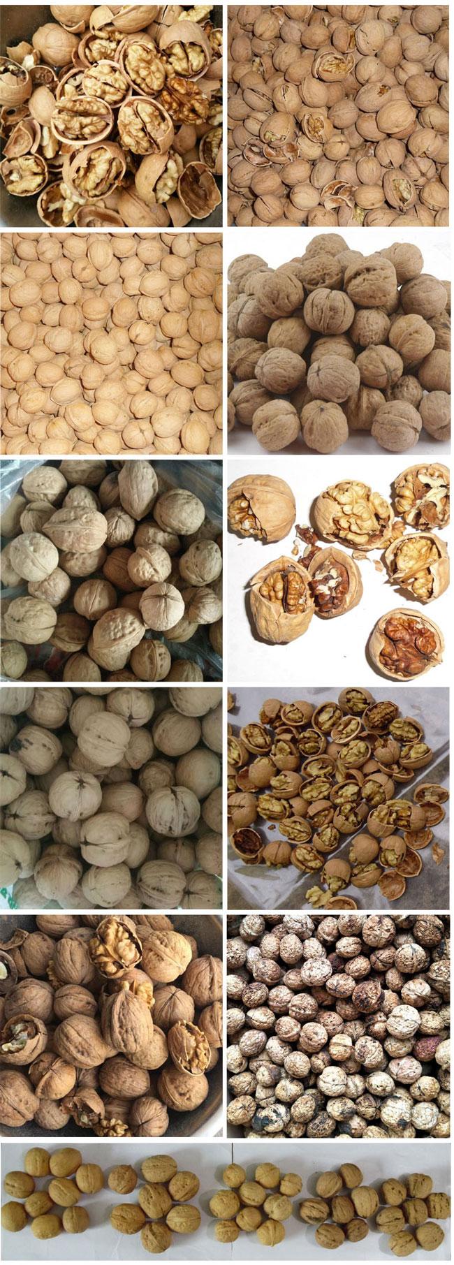 walnut with thin shell