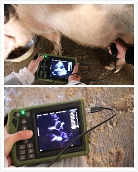 Veterinary ultrasound