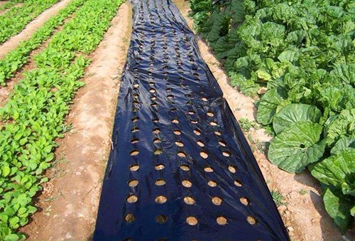 Perforated mulch film Manufacturers, Perforated mulch film Factory, Supply Perforated mulch film