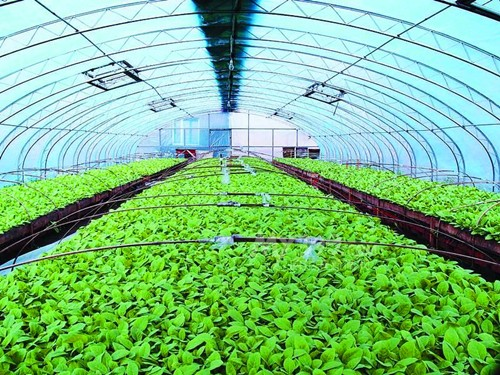 Tobacco Greenhouse Films