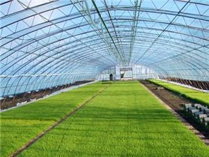Paddy Greenhouse Films