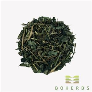 Dried Andrographis Paniculata Herb Cut