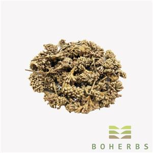 Dried Buddleja Officinalis