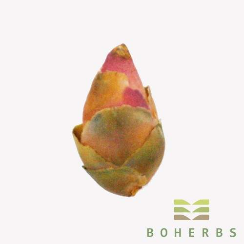 Dried Camellia Flower Bud Manufacturers, Dried Camellia Flower Bud Factory, Supply Dried Camellia Flower Bud
