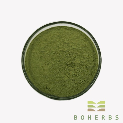 Oat Grass Powder Manufacturers, Oat Grass Powder Factory, Supply Oat Grass Powder