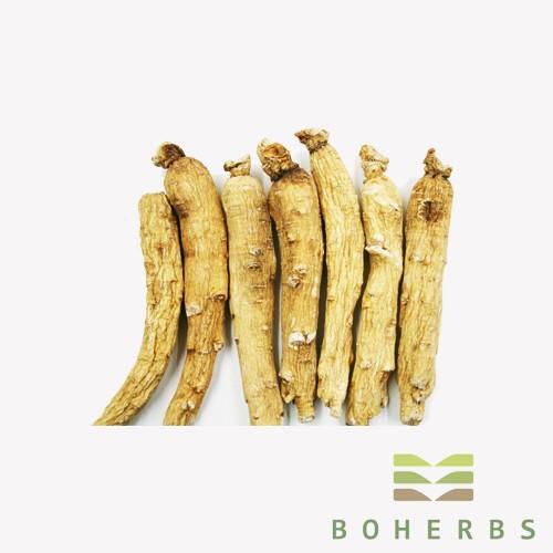 Panax Ginseng Root Extract Powder Manufacturers, Panax Ginseng Root Extract Powder Factory, Supply Panax Ginseng Root Extract Powder