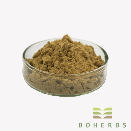Echinacea Purpurea Herb Extract Powder