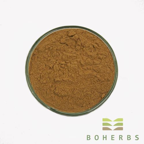 Pure Ginkgo Biloba Extract Powder