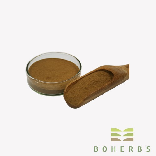 Ginkgo Biloba Leaf Extract Powder