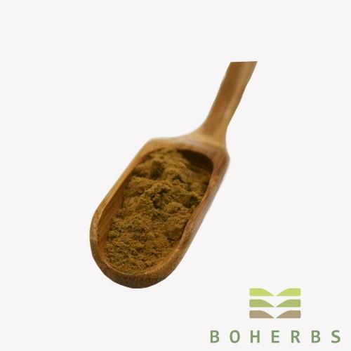 Poudre d'extrait de champignon Reishi