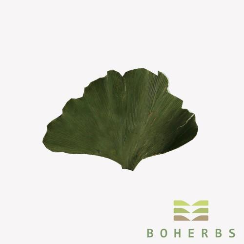 Ginkgo Biloba Leaf Dried Certified Organic Manufacturers, Ginkgo Biloba Leaf Dried Certified Organic Factory, Supply Ginkgo Biloba Leaf Dried Certified Organic