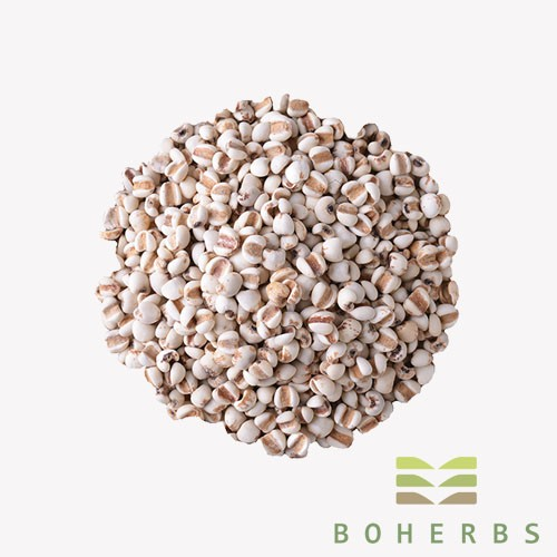 Coix Seed Certified Organic