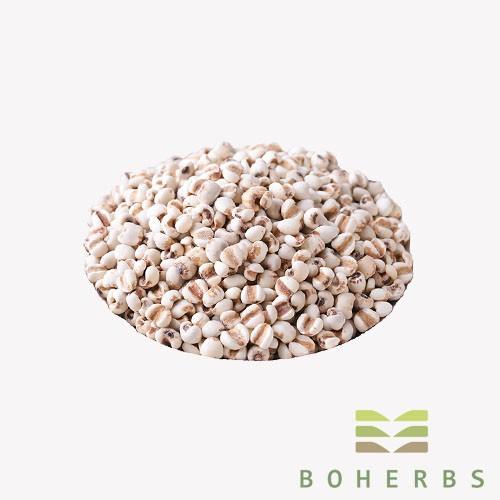 Coix Seed Certified Organic Manufacturers, Coix Seed Certified Organic Factory, Supply Coix Seed Certified Organic