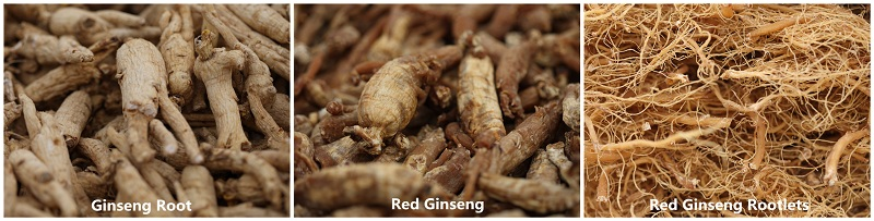 Red Gingseng Root