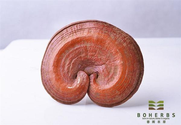 Reishi Mushroom Extract