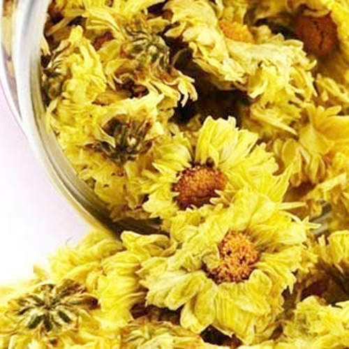 Chrysanthemum For Sale