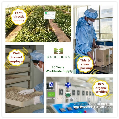 Chinese Skullcap Certified Organic Manufacturers, Chinese Skullcap Certified Organic Factory, Supply Chinese Skullcap Certified Organic