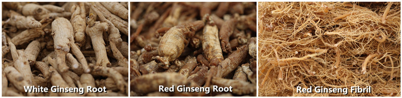 Red Ginseng Rootlets