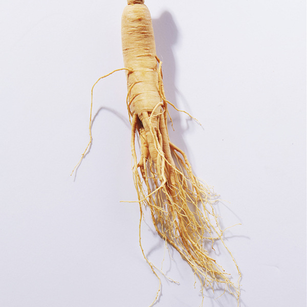 White Ginseng Root Supplier