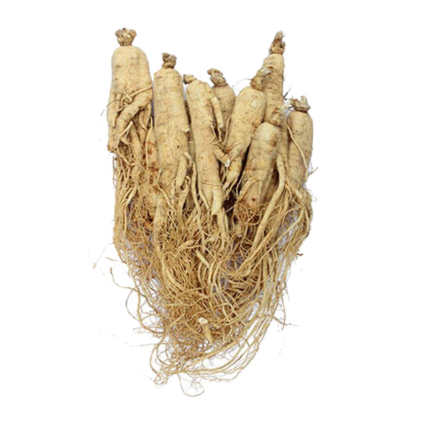 Wild Ginseng Whole Root