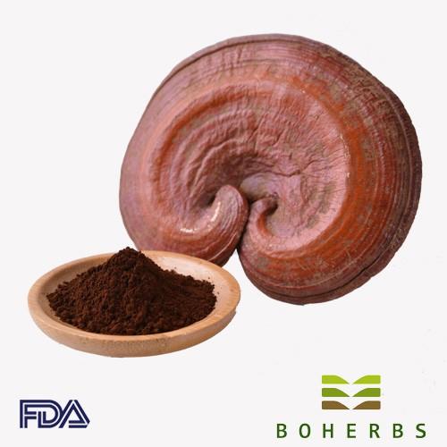 Reishi Mushroom Spore Powder