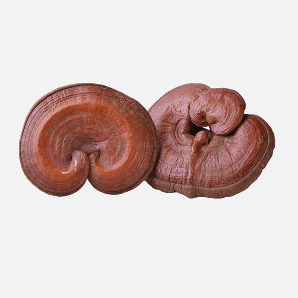 Reishi MushroomTea
