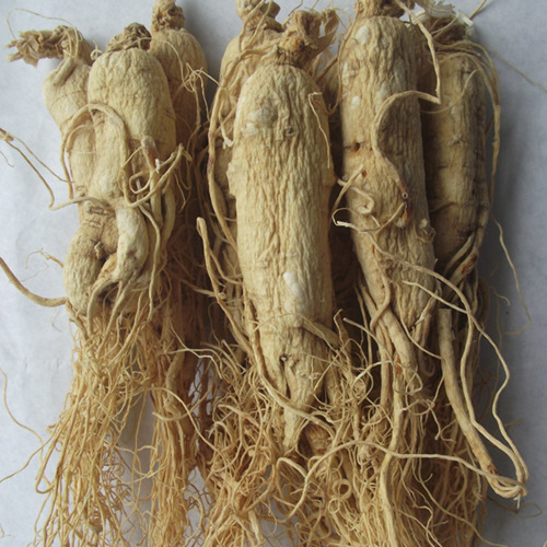 Ginseng Root Whole And Dried
