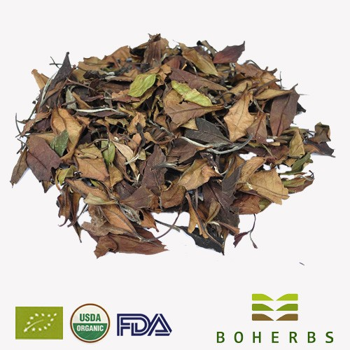 White Tea Certified Organic Manufacturers, White Tea Certified Organic Factory, Supply White Tea Certified Organic