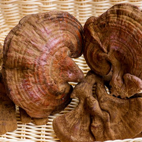 Reishi Mushroom Whole