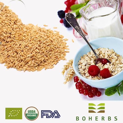 Oats Avena Sativa Certified Organic Manufacturers, Oats Avena Sativa Certified Organic Factory, Supply Oats Avena Sativa Certified Organic
