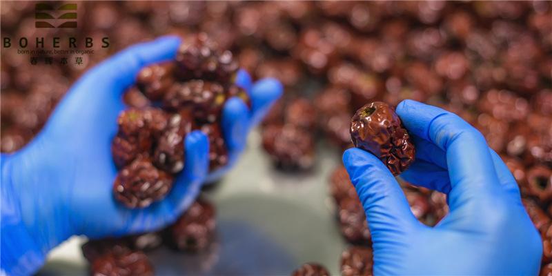 Baies de dattes rouges au jujube biologique