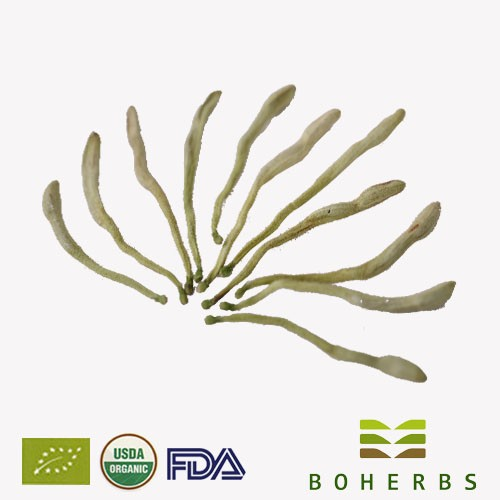 Acheter Fleurs de chèvrefeuille certifiées biologiques,Fleurs de chèvrefeuille certifiées biologiques Prix,Fleurs de chèvrefeuille certifiées biologiques Marques,Fleurs de chèvrefeuille certifiées biologiques Fabricant,Fleurs de chèvrefeuille certifiées biologiques Quotes,Fleurs de chèvrefeuille certifiées biologiques Société,