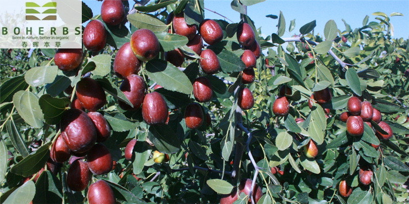 Jujubes फल सूखे