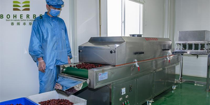Jujubes Fruits Teabag Cut