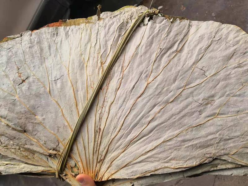 Dried Lotus Leaf Cut